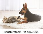 Cute Cat And Funny Dog On Carpet