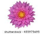 Stock photo water lilly isolated 455975695