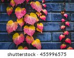 autumn ivy leaves. | Shutterstock . vector #455996575