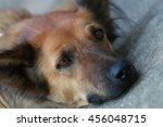 a dog lays down on the floor... | Shutterstock . vector #456048715