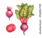 isolated watercolor beetroot on ... | Shutterstock . vector #456081739