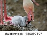 flamingos  phoenicopteridae ...   Shutterstock . vector #456097507