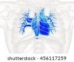 human heart anatomy. blue heart ... | Shutterstock . vector #456117259