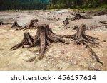 Tree Stumps After Deforestation ...