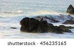 Fur Seal On Rocks  Cape...