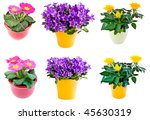 flower collection in pot | Shutterstock . vector #45630319