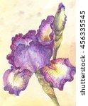 Purple Iris In Watercolor. One...