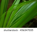 coconut fronds of the palm... | Shutterstock . vector #456347035