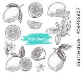 vector lemons hand drawn sketch.... | Shutterstock .eps vector #456403627