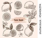 vector lemons hand drawn sketch.... | Shutterstock .eps vector #456406594