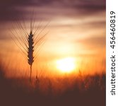 Silhouette Of Wheat On A...