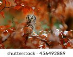 Owl In The Orange Forest....