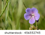 the closeup of blue flower with ... | Shutterstock . vector #456552745