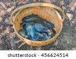 tilapia fish in basket.full of... | Shutterstock . vector #456624514