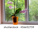 Plant Pot With Orchid In Window
