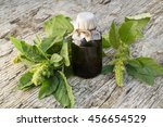 Small photo of Redroot pigweed also called red-root amaranth, common amaranth, pigweed amaranth, common tumbleweed (Amaranthus retroflexus) and pharmaceutical bottle. Used in herbal medicine, healthy eating