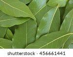 fresh bay leaves  for... | Shutterstock . vector #456661441