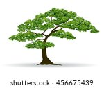 tree and leaf vector | Shutterstock .eps vector #456675439