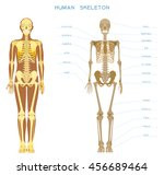 human anatomy. detailed... | Shutterstock .eps vector #456689464