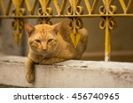 Stray Ginger Cat Lies Under Th...