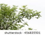 branch with green leaf on the... | Shutterstock . vector #456835501