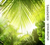 palm trees in the sunny tropic... | Shutterstock . vector #456909991