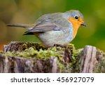 european robin  erithacus... | Shutterstock . vector #456927079
