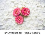 all of rose  stem  rose flowers'... | Shutterstock . vector #456943591