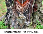 natural resin from pine tree...   Shutterstock . vector #456947581