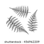 Black Isolated Fern Branches ...