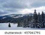 Snow Covered Trees In The Gian...