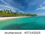 Coconut Palm Trees On The...