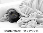 Stock photo cute grey cat on sofa in the room 457193941