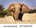 elephant in the savannah  in... | Shutterstock . vector #457205359