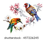 drawing of beautiful bright... | Shutterstock . vector #457226245