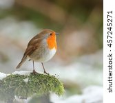 Robin  Also Known As Redbreast...