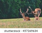 fallow   fallow deer.  dama... | Shutterstock . vector #457269634