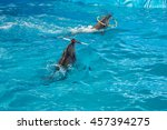 bottle nosed dolphins are... | Shutterstock . vector #457394275