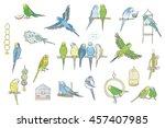 Budgerigar Bird Color Set