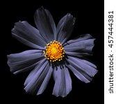 Strange Grey Surreal Flower...