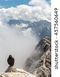 Small photo of Alpine chough at Zugspitze top of Germany