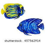 colorful tropical reef fish  ... | Shutterstock . vector #457562914