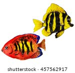 colorful tropical reef fish  ... | Shutterstock . vector #457562917