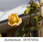 fragrant romantic beautiful... | Shutterstock . vector #457573531