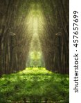 imaginary tree tunnel in the... | Shutterstock . vector #457657699
