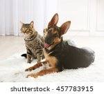 cute cat and funny dog on carpet | Shutterstock . vector #457783915