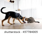 Stock photo cute cat and funny dog eating food 457784005