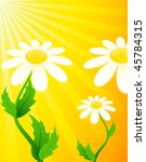 beautiful camomiles on a yellow ... | Shutterstock .eps vector #45784315