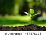 young plant in the morning... | Shutterstock . vector #457876135