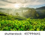 Sunrise Over Tea Plantations I...